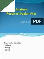 Anatomi Respi Bag Atas