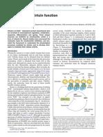 Vitamin B3 and Sirtuin Function