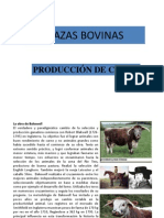 Clase Razas Bovinas 2013