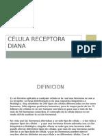 Célula Receptora Diana