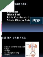 fisiologi urinaria
