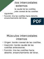 Músculos Intercostales Externos e Internos