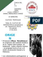 Cultivo de Banano en Ecuador(CONSULTA)