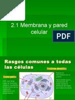 2.1.1. Membrana y pared celular.ppt
