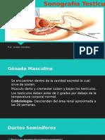 sonografia testicular