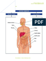 A.2.1 - Sistema Digestivo Humano - Ficha Informativa