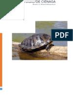Tortugas de Cienaga (Kinosternidae)