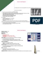 Fichas de Anatomia
