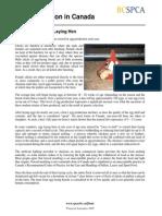 Bcspca Factsheet Life of an Egg Laying Hen