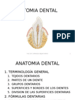 anatomiadental-120910133212-phpapp02.ppt