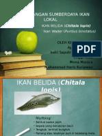 Pengembangan Sumberdaya Ikan Lokal