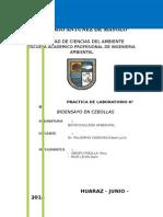 Biotecnologia - Practica N° 02 BIOENSAY CEBOLLA