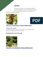 Plantas Relajantes - Copia