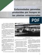 30 Enfermermedades Producidas Por Hongos en Las Plantas Ornamentales