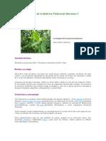 Atlas de Las Plantas de La Medicina Tradicional Mexicana