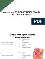 Bases Anatomicas y Fisiologicas Del Tracto Genital