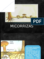 hongos arbusculares (Micorrizicos)