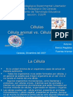 celulas-vegetal-y-animal-1197569627207931-5