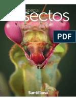 Enciclopedia insectos