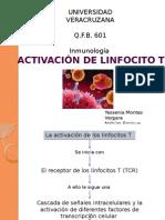 Activacion Linfo t