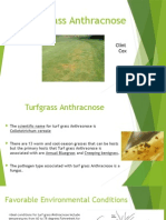 turf grass anthracnose