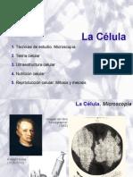 celula_7