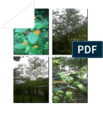Fotos especies de guatemala ;-D