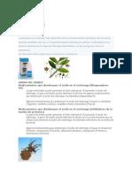 Algunas Plantas Medicinales Con Ejemplo de Medicina
