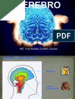 Cerebro Psico