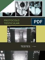 protocolo testicular