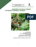 Vegetacion Palenque