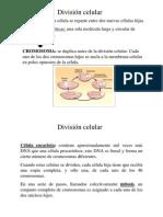 Biología - Mitosis y Meiosis