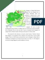 Sebangau Park Proposal (tourism object)