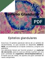 epitelio glandular.pptx