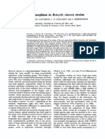 Chromosomal Polymorphism in Botrytis Cinerea Strains