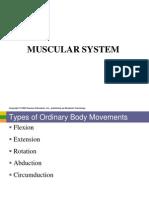Anaphy Lab Muscular System PDF