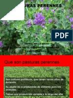 PASTURAS2015