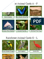 rainforestanimalcards