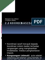 2.3 Koordinasi Saraf