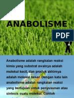 anabolisme-1