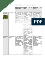 Enfermedades Hídricas Causadas Por Diferentes Agentes Patógenos