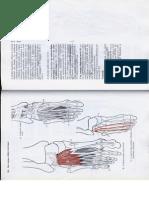 Anatómia I. - Könyv -133
