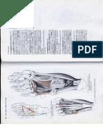 Anatómia I. - Könyv -135