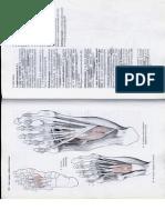 Anatómia I. - Könyv -136