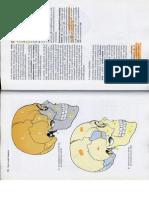 Anatómia I. - Könyv -139
