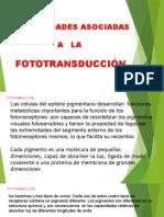 Enfermedades Retinales Asociadas a La Fototransduccion