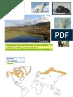 biomas-terrestres