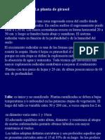 Presentación Girasol II