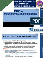 8-CerebroIII-AreasCorticalesFuncionales-2015.pdf
