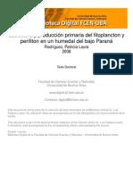Estructura y producción primaria del fitoplancton y perifiton en un humedal del bajo Paraná - Rodríguez, P..pdf